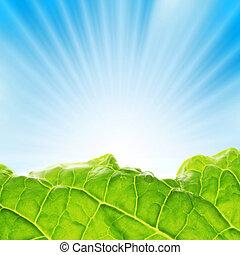 fresco, fogliame, con, raggi sole, salita, sopra, blu, sky.