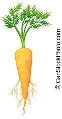 fresco, foglie, carota, radice