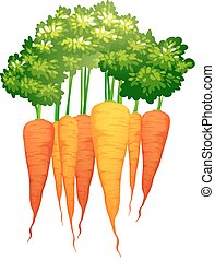 fresco, foglie, carote