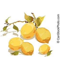 fresco, foglie, limone, ramo