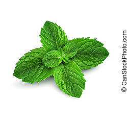 fresco, foglie, menta, sfondo bianco