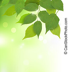 fresco, foglie, sfondo verde, natura