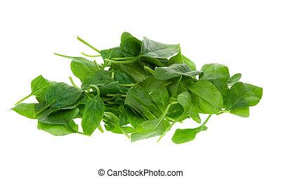 fresco, foglie, spinacio
