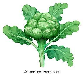 fresco, foglie, verde, broccolo