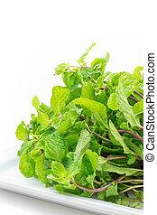 fresco, folhas, hortelã, fundo branco