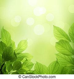 fresco, folhas, verde