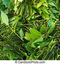 fresco, folhas, verde, leaves., laurel