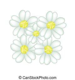 fresco, fondo blanco, milenrama, flores