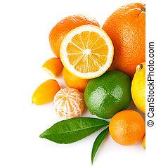 fresco, fruta cítrica, com, folha verde