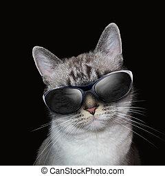 fresco, gatto bianco, con, festa, occhiali da sole, su, nero