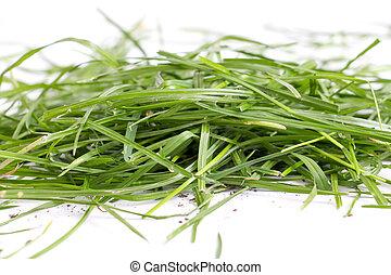 fresco, grama verde, branco, fundo
