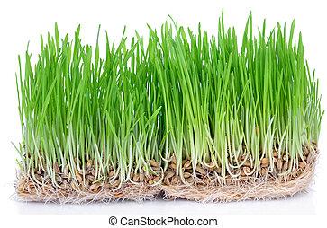 fresco, grama verde