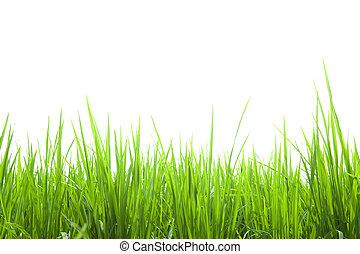 fresco, grama verde, isolado, branco