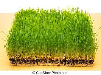 fresco, grama verde, ligado, um, tabela