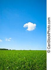 fresco, hierba verde, con, brillante azul, cielo