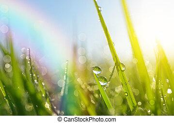 fresco, hierba verde, con, el rocío cae
