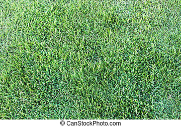 fresco, hierba verde, fondo.