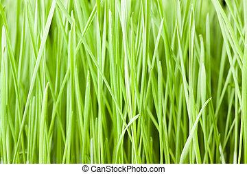 fresco, hierba verde, plano de fondo