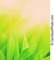 fresco, hierba verde, primer plano