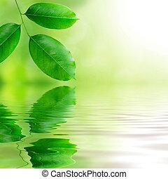 fresco, hojas, fondo verde