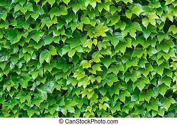fresco, hojas, verde, Plano de fondo