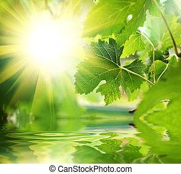 fresco, hojas verdes, encima, agua