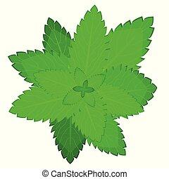 fresco, leaf., menta