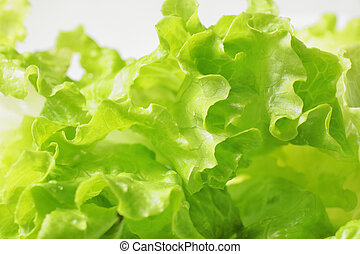 fresco, lechuga verde