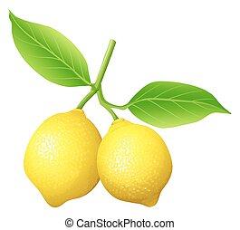 fresco, limone, ramo