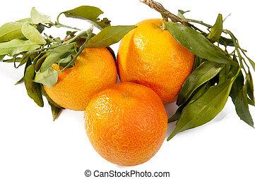 fresco, mandarina, fruits, con, hojas verdes, aislado