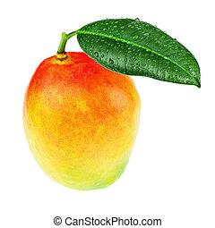 fresco, mango, frutta, con, congedi verdi, isolato, bianco, fondo.