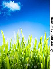 fresco, manhã, orvalho, grama, em, a, primavera, um,...