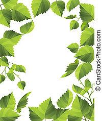 fresco, marco, hojas verdes, rocío