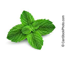 fresco, menta, hojas, en, un, fondo blanco