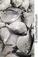 fresco, mercado, peces