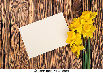fresco, narcisos silvestres,  FL, amarela, primavera