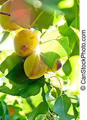 fresco, natural, fruits, con, hojas verdes