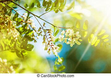 fresco, novo, verde sai, e, flores