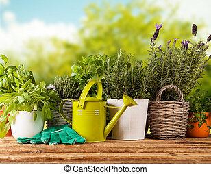 fresco, ollas, hierbas