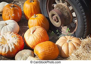 fresco, outono, abóboras, e, antigas, enferrujado, antigüidade, pneu