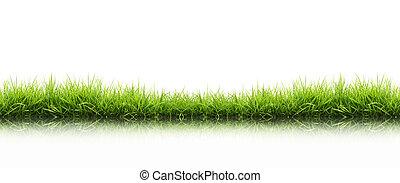 fresco, pasto o césped, verde, aislado, primavera
