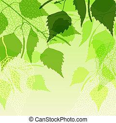 fresco, plano de fondo, de, verde, abedul, leaves.