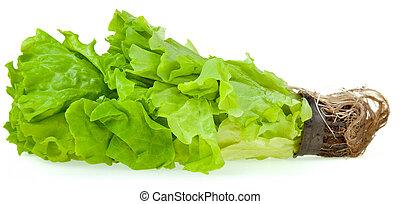 fresco, planta, lechuga verde