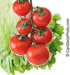 fresco, planta, tomates, rojo