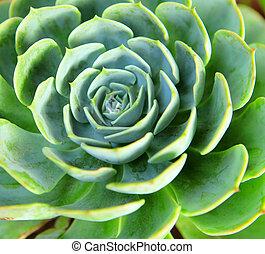 fresco, planta verde, cicatrizarse