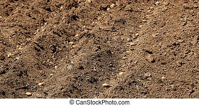 fresco, plantado, batatas