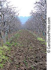 fresco, ploughed, pomar maçã