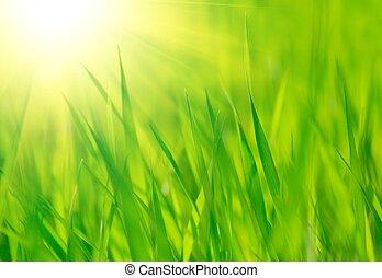 fresco, primavera, erba verde, e, luminoso, riscaldare, sole