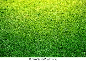 fresco, primavera, hierba verde