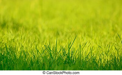 fresco, primavera, hierba verde, en, luz del sol